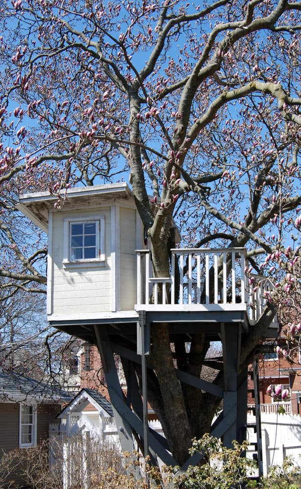 Little white treehouse with blossom tree